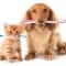 Higiene oral nos nossos animais
