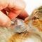 Check-ups anuais são essenciais à saúde dos nossos animais